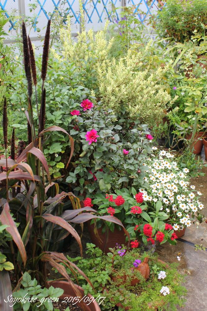 9月中旬のバルコニーの花