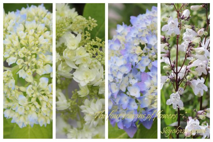 アジサイなどの初夏のお花のコラージュ写真
