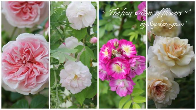 薔薇のコラージュ写真